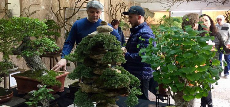 Киевлян приглашают посмотреть на миниатюрные деревья